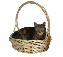 cattea-gift-basket