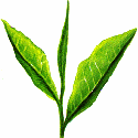 blog-tea-leaf