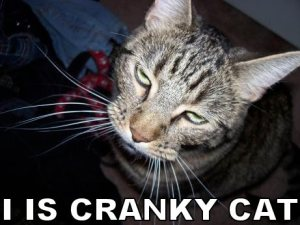cranky-cat